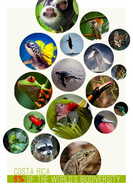 6% Biodiversity Costa Rica