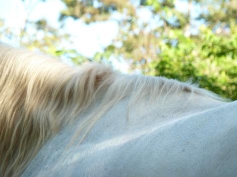 Kindred Spirits Horse Back