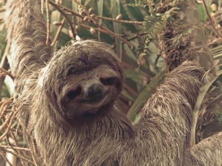 Sue the Sloth
