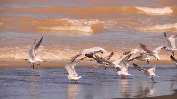 Rio Estrella with its incredible bird life
