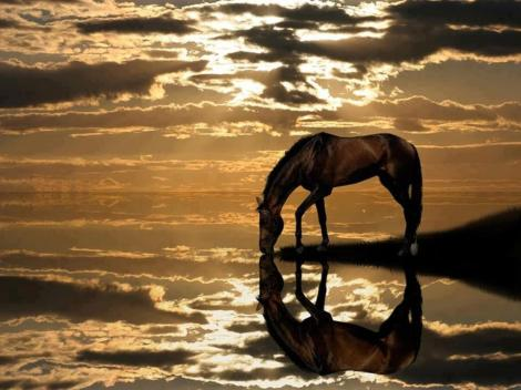 Horse reflections photo