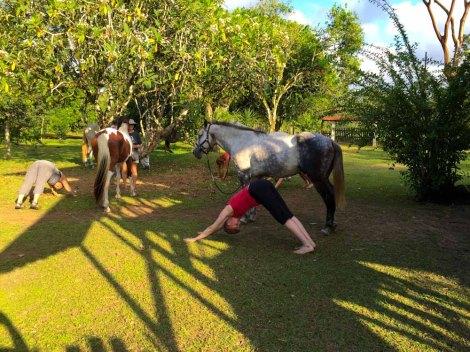 Downward Facing Horse Poses