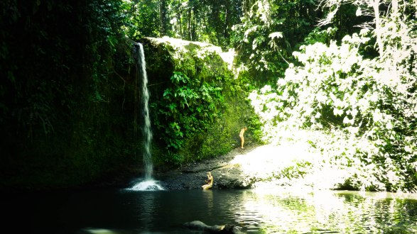 Waterfalls in the Rainforest