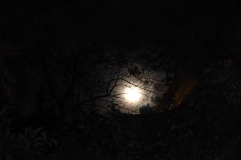 On a Midsummers night, a Caribbean full moon!