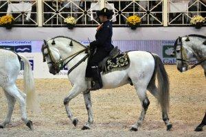 Javier Breton Perez Royal Spanish Equestrian School