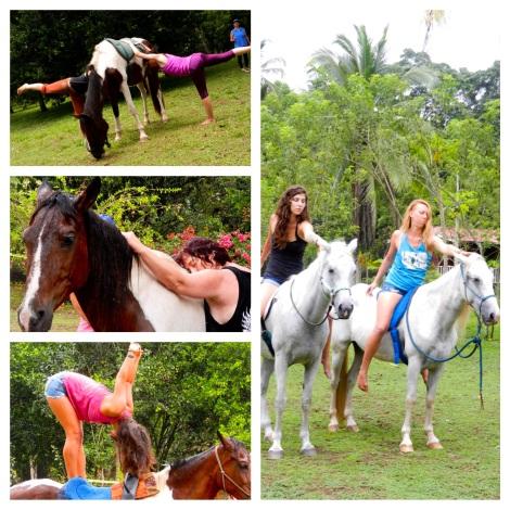 Yoga and horses
